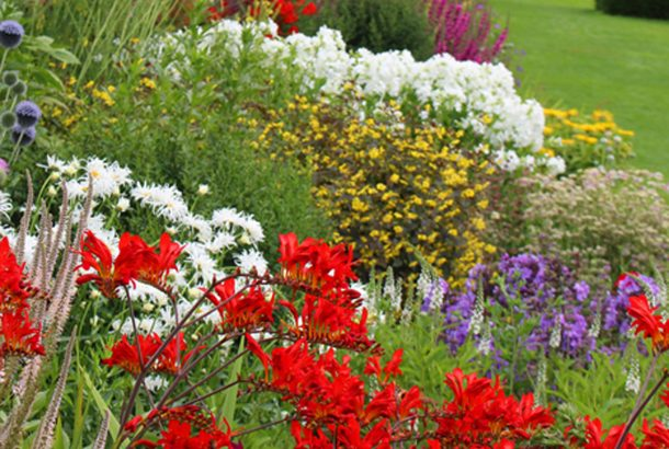 Herbaceous Border in The Gardens
